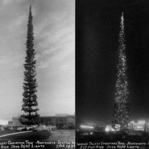 semestafakta-221-foot-douglas-fir