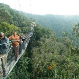 semestafakta-Nyungwe National Park