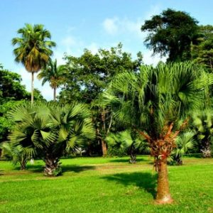 semestafakta-The Limbe Botanical Garden4
