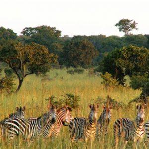 semestafakta-Kafue National Park2