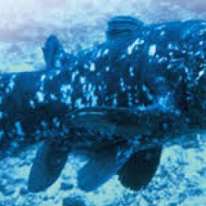 semestafakta-TheWest Indian Ocean coelacanth