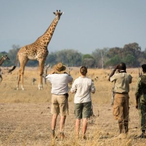 semestafakta-walking safari zambia2