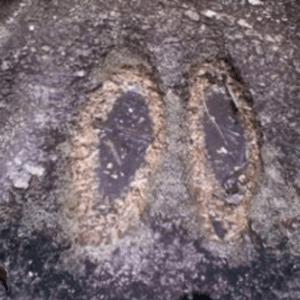semestafakta-Agbooogun foot print