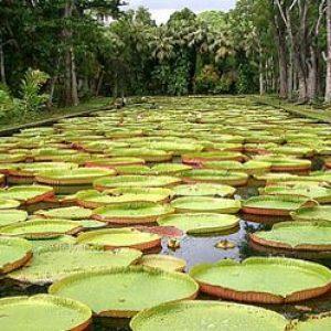 semestafakta-Sir Seewoosagur Ramgoolam Botanic Garden2