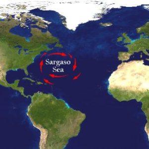 semestafakta-sargasso sea