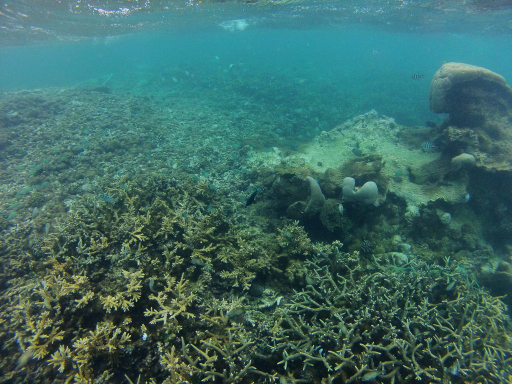 Coral Reef Conservation The Rainforests Of The Ocean B