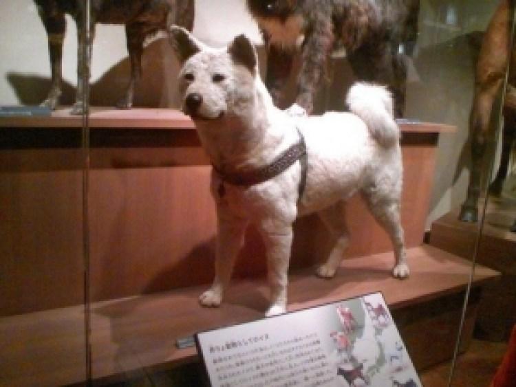 Incontare Hachiko: 5 luoghi legati al più famoso cane giapponese