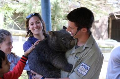 Conociendo al Wombat