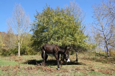 burro-catala