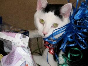 The lovey-est cat, ever. Patient, too...