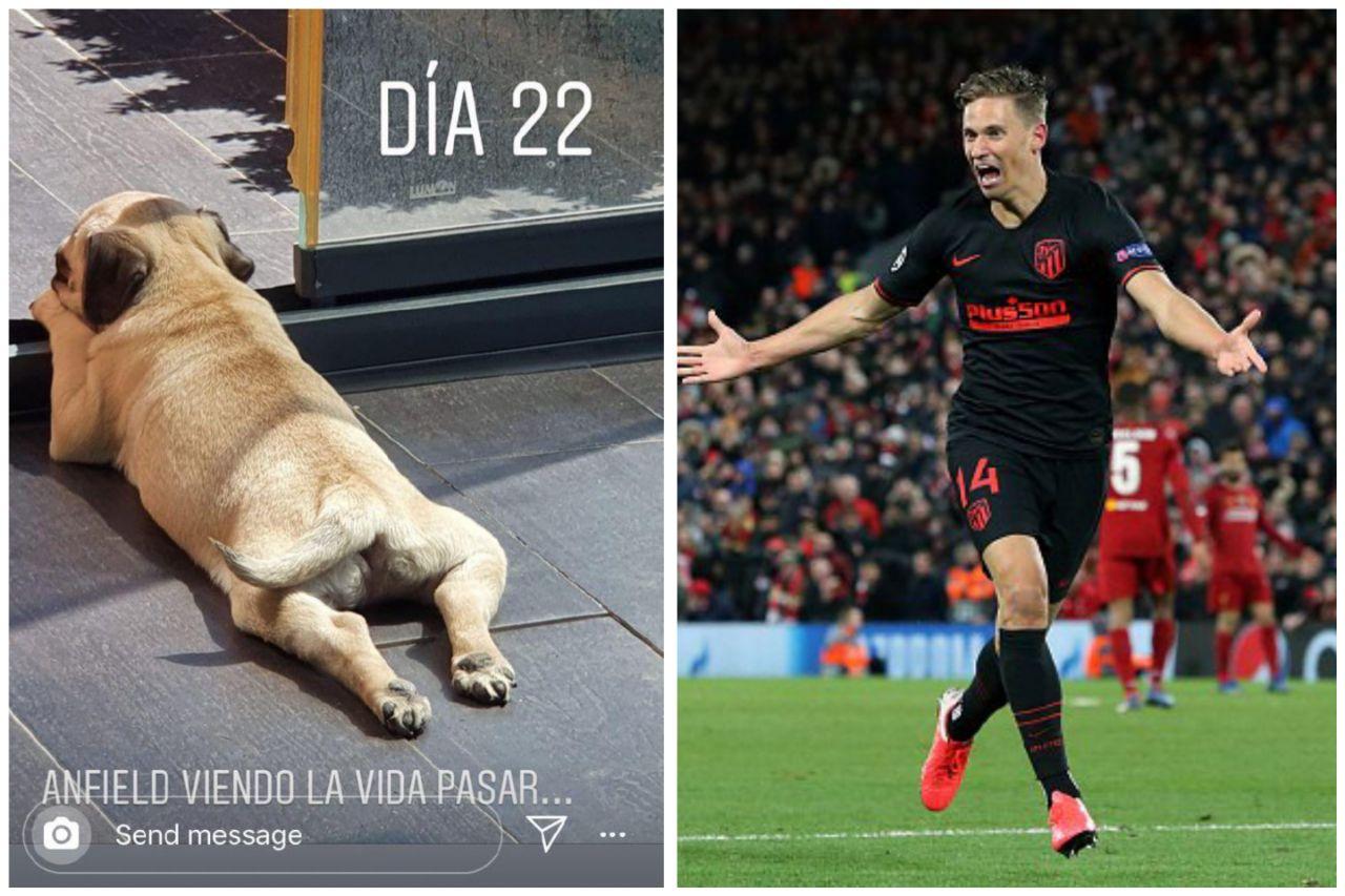Marcos Llorente Anjing