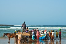 Fishermen bringing in the catch that gets sold on to the locals and small businessmen straight on the beach in Yoff, Senegal. Photo by Marko Preslenkov.