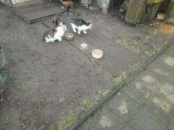 Katzenkolonien4