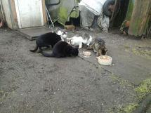 Katzenkolonien9