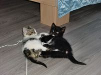 Katzenbaby1