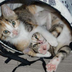 Katzenkinder1