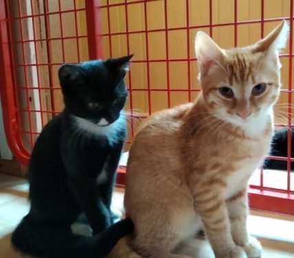 Kiky und Olly