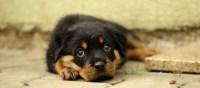 Hundewelpen fr Senioren - Das kostet ein Hund