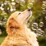 Que tal começarmos a agir com a sabedoria canina?
