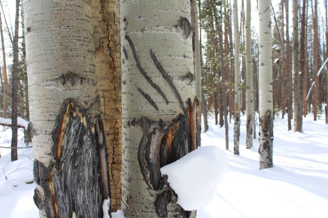 Bear marks in Rocky Mountain National Park
