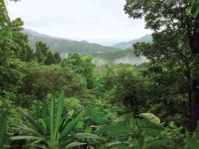 Overview of the verdant landscape of Dominica