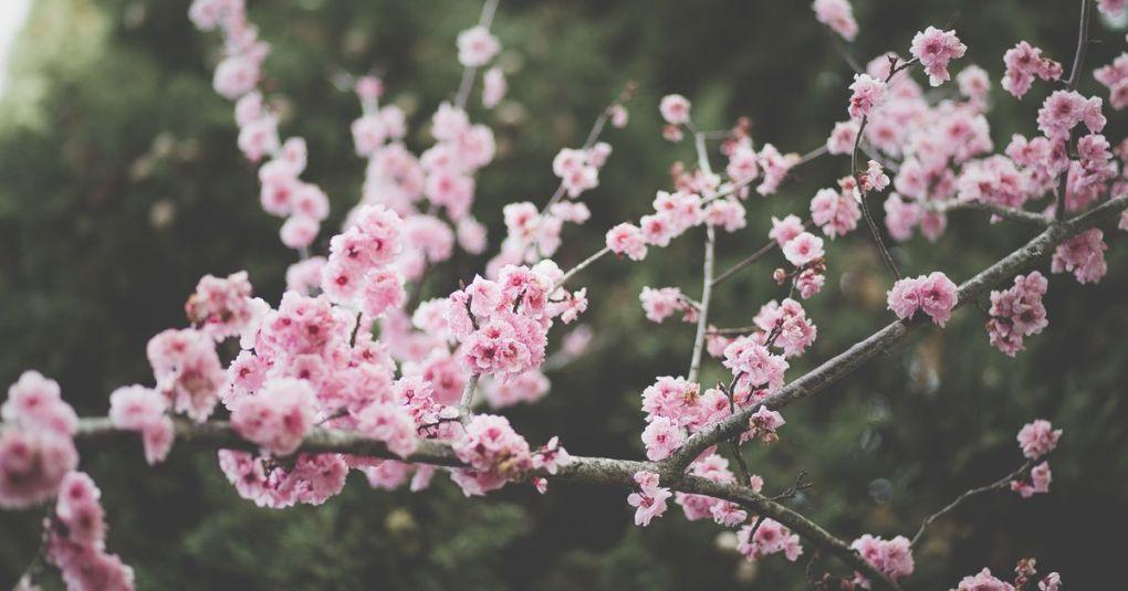 Sporočilo za današnji dan: Kaj nas uči pomlad