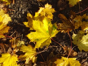 Autumn leaves. Reviewing progress