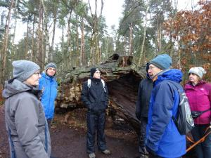 Dec 2017 Sherwood Forest learning