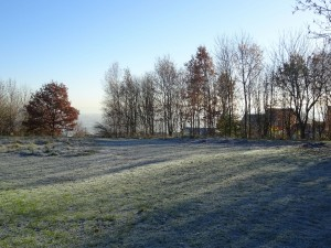 Frosted Fields