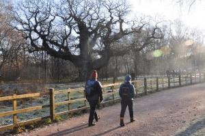 Dec 2016 Major Oak