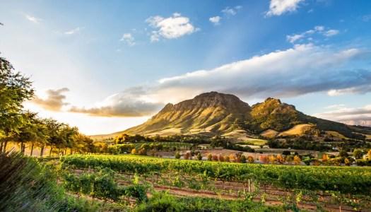 Hartenberg – prisvinnande, sydafrikanskt vin kommer till Sverige