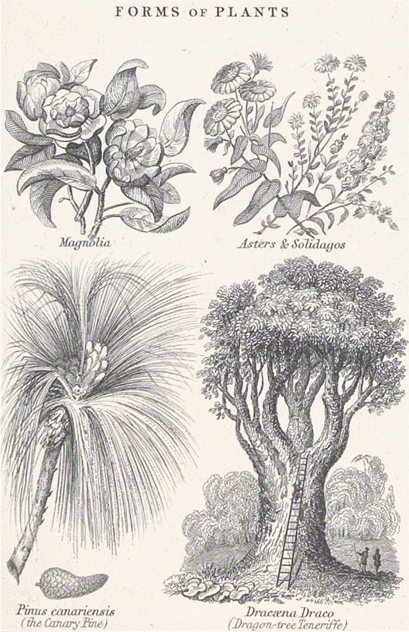 Botanical Forms of Plants