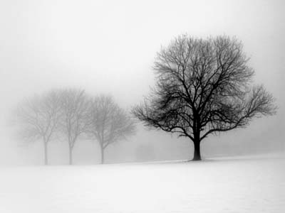 Black And White Tree Trunk Wallpaper What We Learn From Trees Sensible Thoughts
