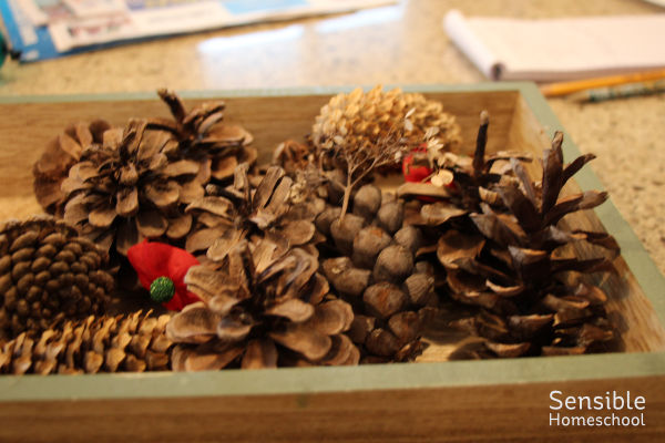 pinecones in tray