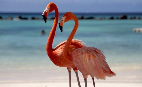 Isola di Aruba (33)