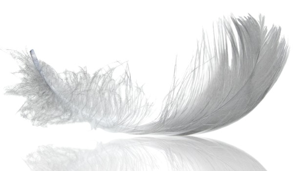 12893-feather-story-rosie