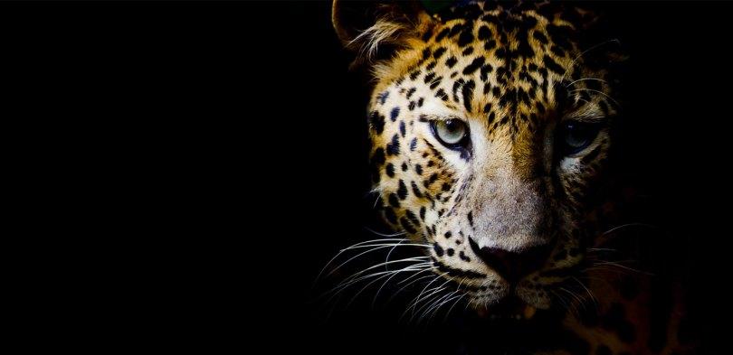 leopardi-bg-1
