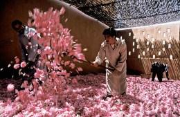 Morocco, Dades valley, El Kelaa M'Gouna, rose festival