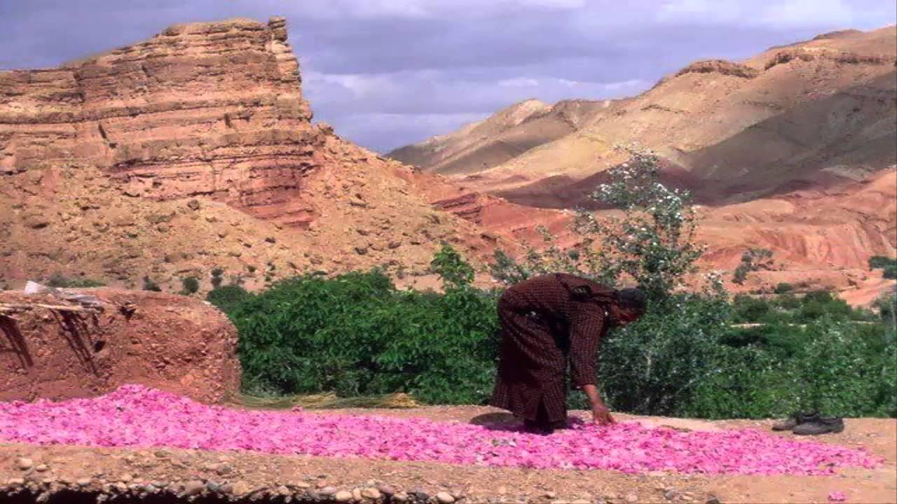 Maggio: il mese che profuma di rose -