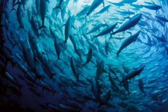 la-mer-blue-heart-a-supporto-delle-aree-marine