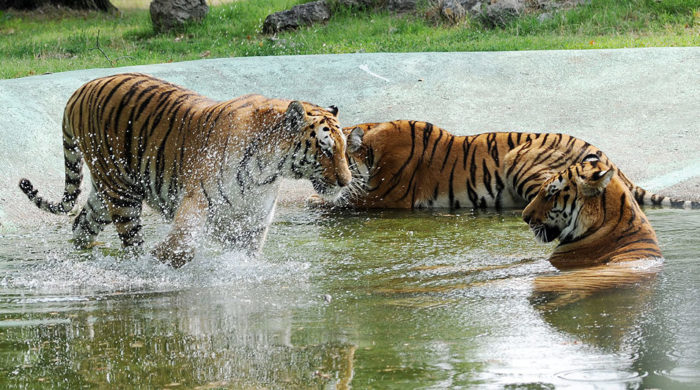 Safari Park Lago Maggiore