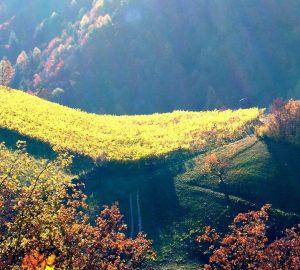 castagne-Alto-Adige-