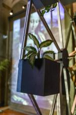 mostra-botanica-leonardo-MUSE-6