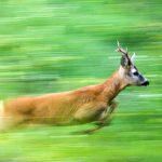Autunno selvaggio: workshop di fotografia naturalistica