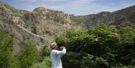 Anantara-Al-Jabal-Al-Akhdar-Resort-Destination-Rose-Farm-01