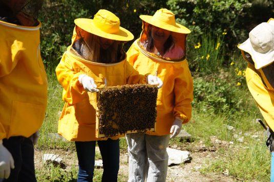 castello-di-meleto-inaugurato-il-parco-delle-api