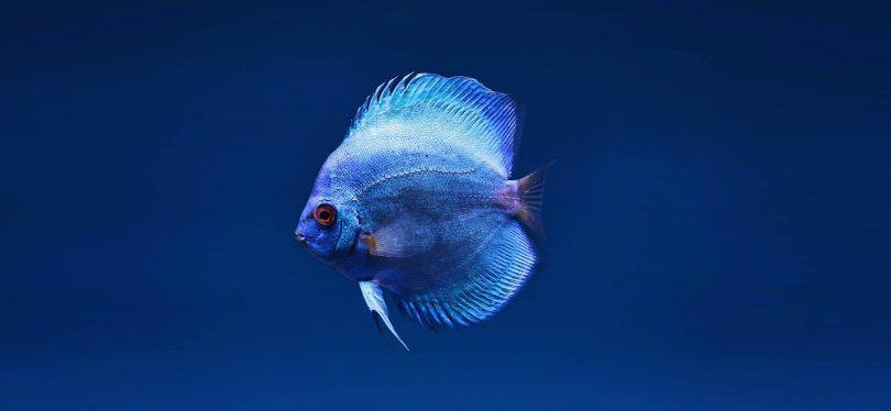 il-colore-blu-rapsodia-di-armonie-benessere