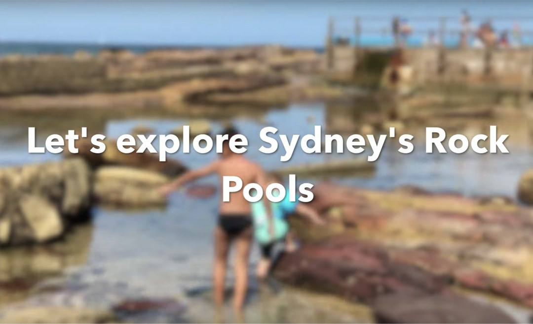 Sydney Rock Pools & Sea Life Sydney Aquarium Review