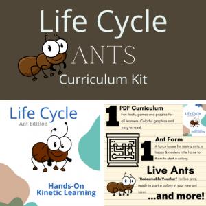 Educational Ant Farm Curriculum Kit