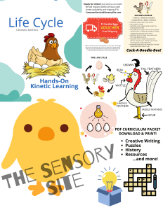 chicken egg hatching life cycle curriculum